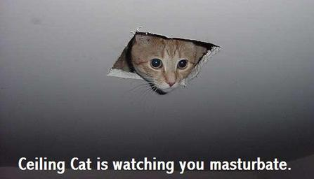 Ceilingcat_1